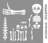 set of cartoon human bones ... | Shutterstock .eps vector #331309904