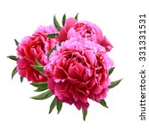 Stock photo blooming three red peonies isolated on white background 331331531