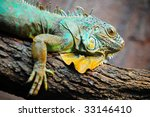 iguana   Shutterstock . vector #33146410