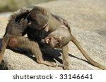 Wrestling Baboons