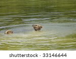 young brown bears | Shutterstock . vector #33146644