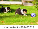 Stock photo collie puppies playing with a toy in the garden 331479617