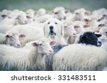 a shepherd dog popping his head ... | Shutterstock . vector #331483511