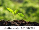 green sprout growing from seed... | Shutterstock . vector #331587905