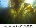 Seaweed Kelp Forest Underwater...