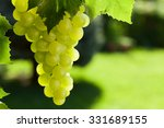 Vine And Bunch Of White Grapes...