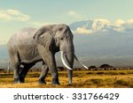 Elephant On Kilimajaro Mount...
