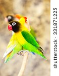 Small photo of Agapornis Personatus Sitting On A Branch Among Other Species Of The Same Family Also Called Loving Bird