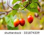 Solanum Betaceum Is A Small...