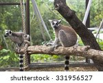 Ring Tailed Lemur In The Zoo...