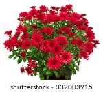 bouquet of red flowers of... | Shutterstock . vector #332003915