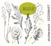 set of hand drawn arugula.... | Shutterstock .eps vector #332008457