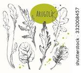 set of hand drawn arugula.... | Shutterstock .eps vector #332008457