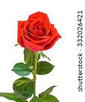 red rose flower  green leaves ... | Shutterstock . vector #332026421