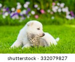 Stock photo white swiss shepherd s puppy hugging kitten on green grass 332079827