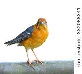 female of orange headed thrush... | Shutterstock . vector #332088341