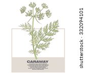 caraway. illustration of... | Shutterstock .eps vector #332094101