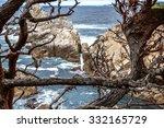 sea lion cove at point lobos...