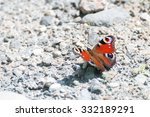Splendid Peacock Butterfly ...