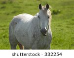 A White Speckled Horse Looking...