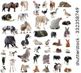 Stock photo farm animals in front of white background 332358749