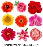 single flower heads. lily ... | Shutterstock . vector #332438219