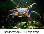 Freshwater Aquarium Crab...