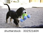 Stock photo puppy dog playing with a toy 332521604