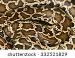 Pattern Boa Snake Skin Abstrac...
