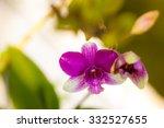purple  orchid flowers on...   Shutterstock . vector #332527655