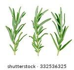 sprigs of rosemary on a white... | Shutterstock . vector #332536325