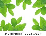 green leaves in the garden at... | Shutterstock . vector #332567189