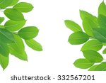 green leaves in the garden at... | Shutterstock . vector #332567201