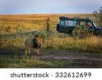 Beautiful Lion With A Safari...