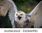 Detail Of Head Of Snowy Owl...