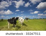 young cows in a fresh green... | Shutterstock . vector #33267511