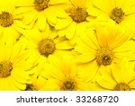 yellow summer flowers | Shutterstock . vector #33268720