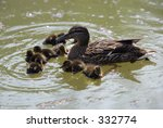 a proud female duck with her... | Shutterstock . vector #332774