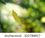 Stock photo yellow leave falling floating in the wind taking with easy photography stop action trick outdoor 332788817