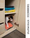 kitten in closet | Shutterstock . vector #332888081