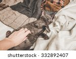 Stock photo kitten in bed 332892407