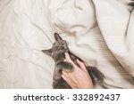 Stock photo kitten in bed 332892437