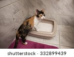 Cat In The Litter
