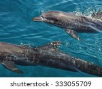 Floating Dolphins