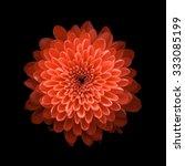 Chrysanthemum On Black...