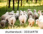 sheep running away | Shutterstock . vector #33316978