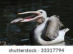 Pelican Caught Some Fish