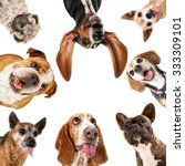 a cute group of dogs taking a...   Shutterstock . vector #333309101