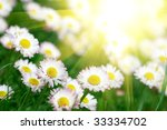 field of daisies | Shutterstock . vector #33334702