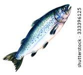 atlantic salmon salmo solar... | Shutterstock . vector #333396125